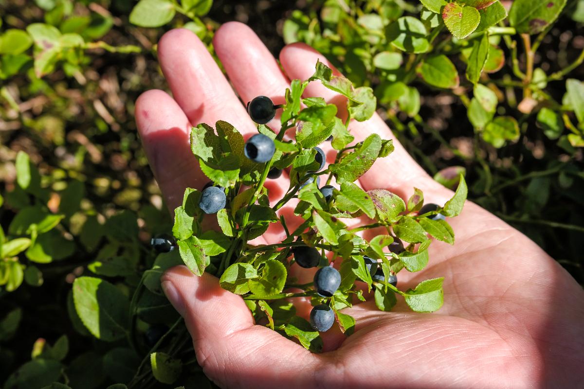 Blåbærsyltetøy uten sukker og konserveringsmidler